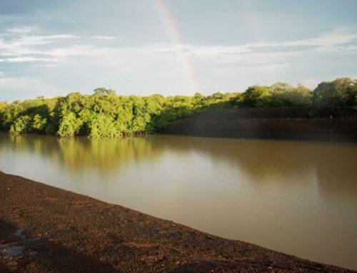 HONDA, le apuesta a la ecología. El programa Carbono Neutro, ha sembrado 180.000 árboles
